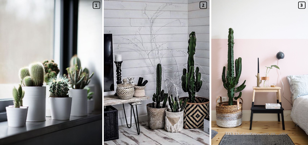 Different varieties and sizes of cacti in homes