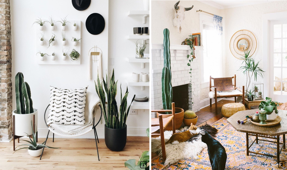 Cacti in scandinavian and ethnic interiors