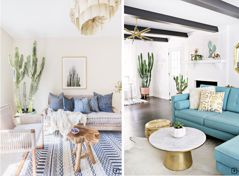 Cacti in bohemian and modern homes