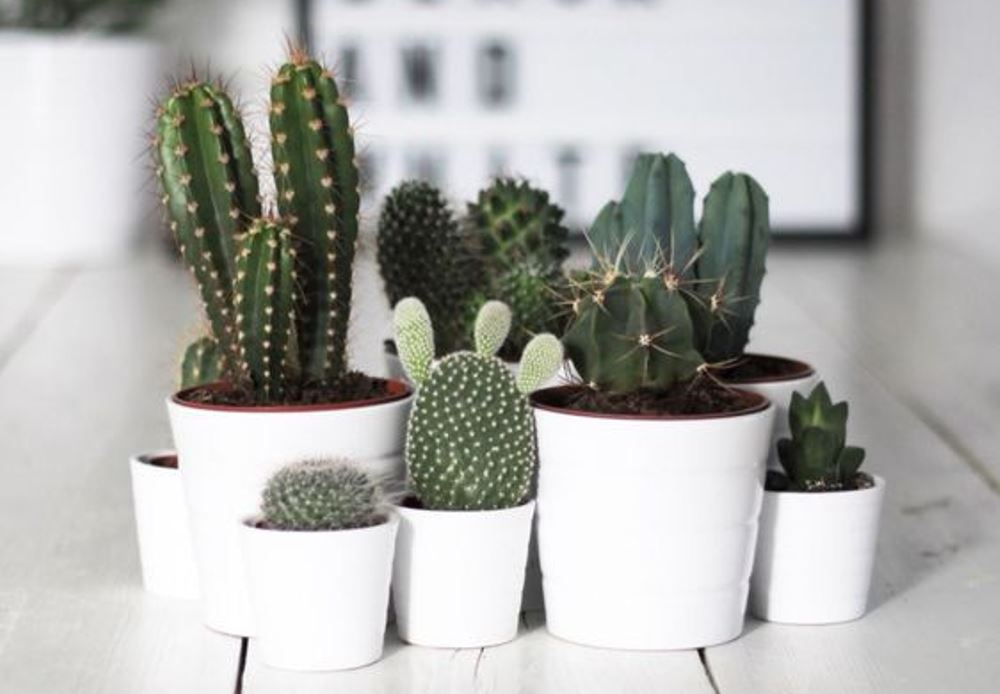Cacti summer trend in interiors, Pinterest - BnbStaging the blog