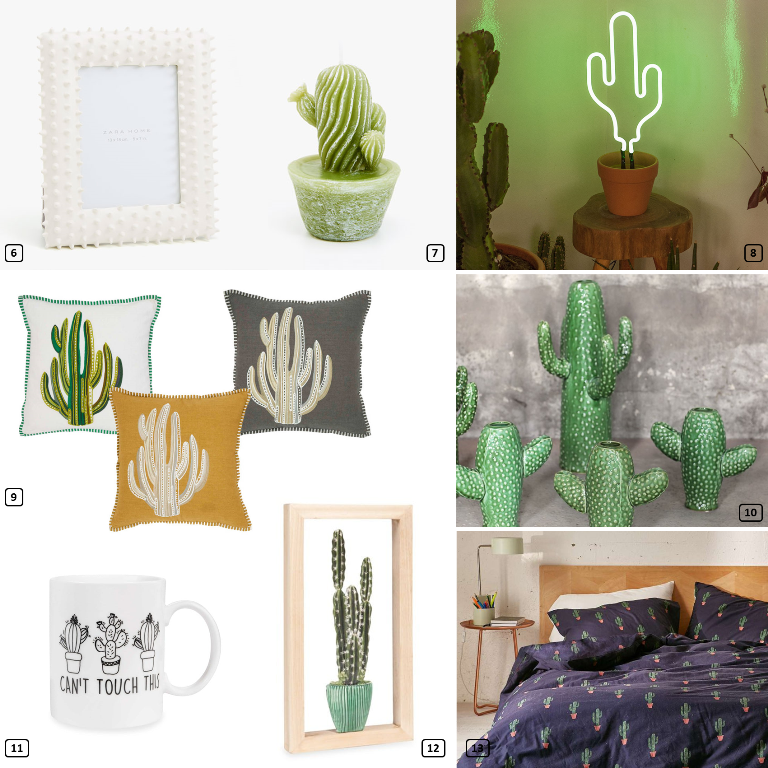 Shopping ideas for cacti