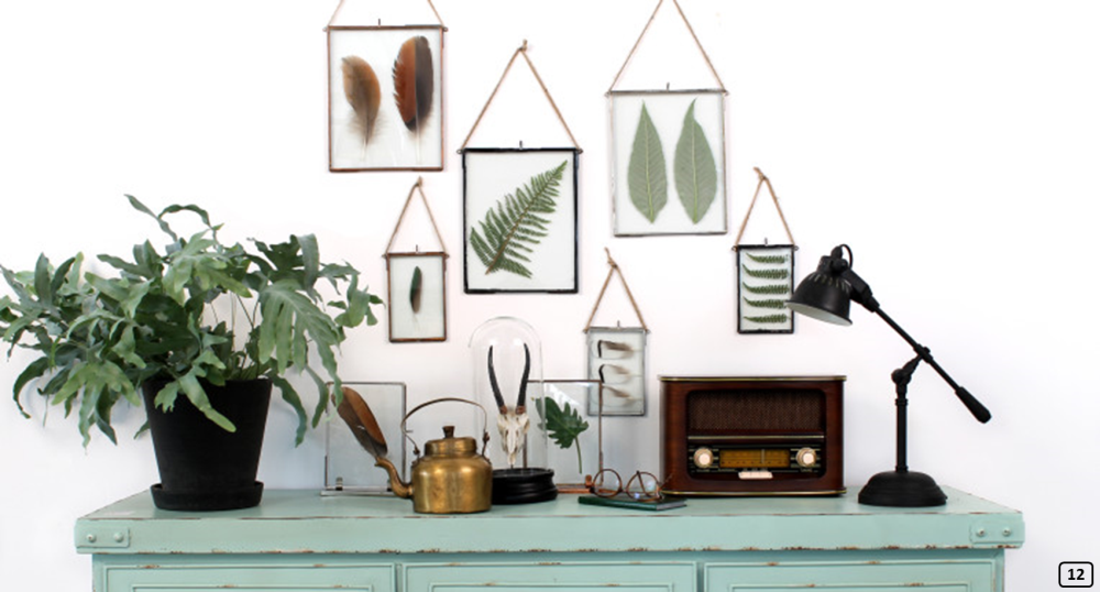 Herbariums and frames with feathers on a white wall