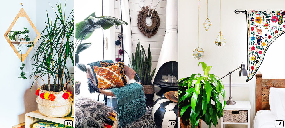 Lush plants in homes