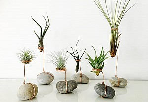 Air plants, Terrariaart - BnbStaging the blog