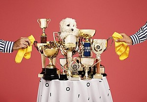 Table with trophies and a dog