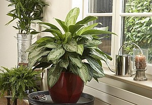 Air-filtering plants, from Rustica - BnbStaging the blog